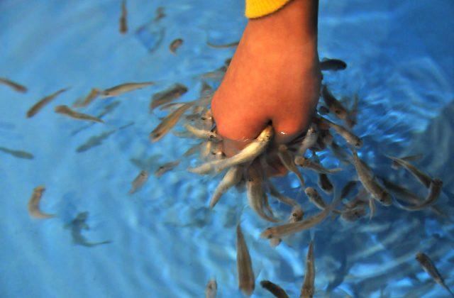 宮津市にある水族館「丹後魚っ知館」は子連れファミリーがゆるく楽しめるよ!