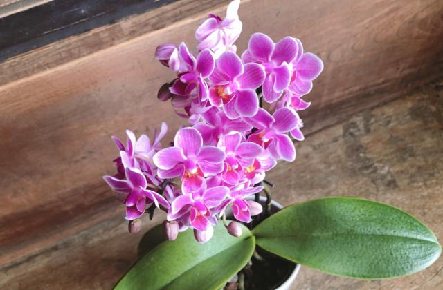 豊岡市千代田町にある花屋「こしの花店 KOSHINO FLOWER SHOP」で母の日のプレゼントを選んだよ!